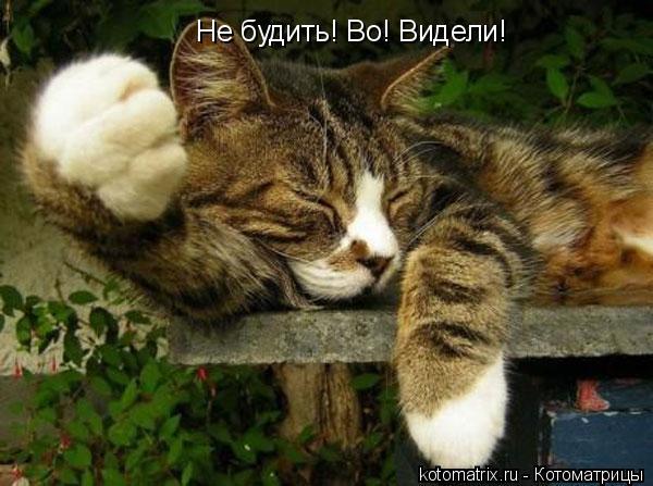 Котоматрица: Не будить! Во! Видели!