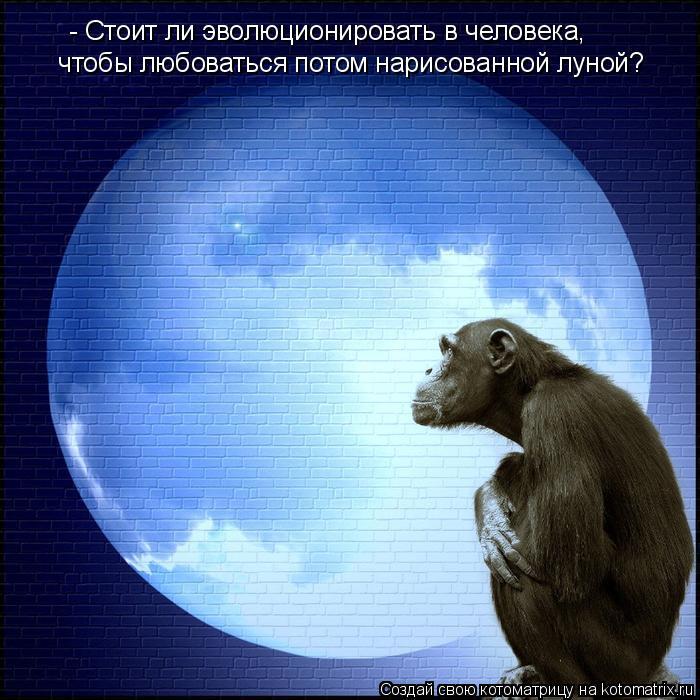Котоматрица: - Стоит ли эволюционировать в человека,  чтобы любоваться потом нарисованной луной?