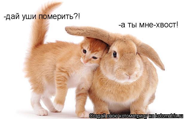 Котоматрица: -дай уши померить?! -а ты мне-хвост!