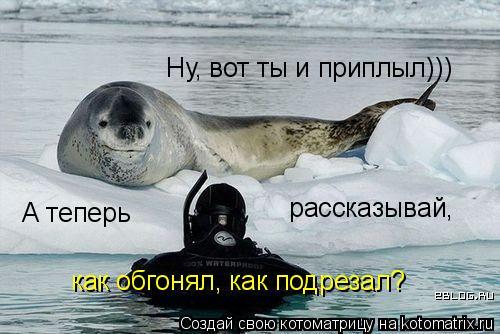 Котоматрица: Ну, вот ты и приплыл))) А теперь  рассказывай,  как обгонял, как подрезал?