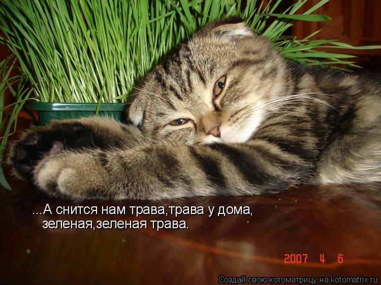 Котоматрица: ...А снится нам трава,трава у дома, зеленая,зеленая трава.