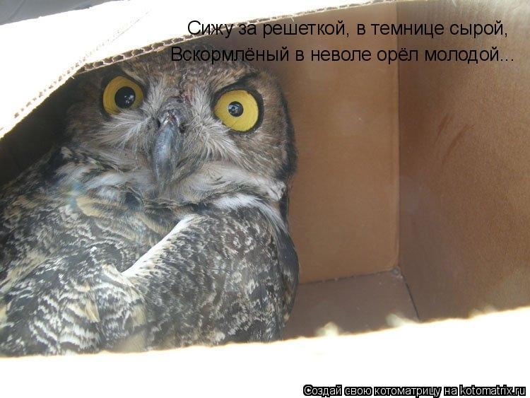 Котоматрица: Сижу за решеткой, в темнице сырой, Вскормлёный в неволе орёл молодой...