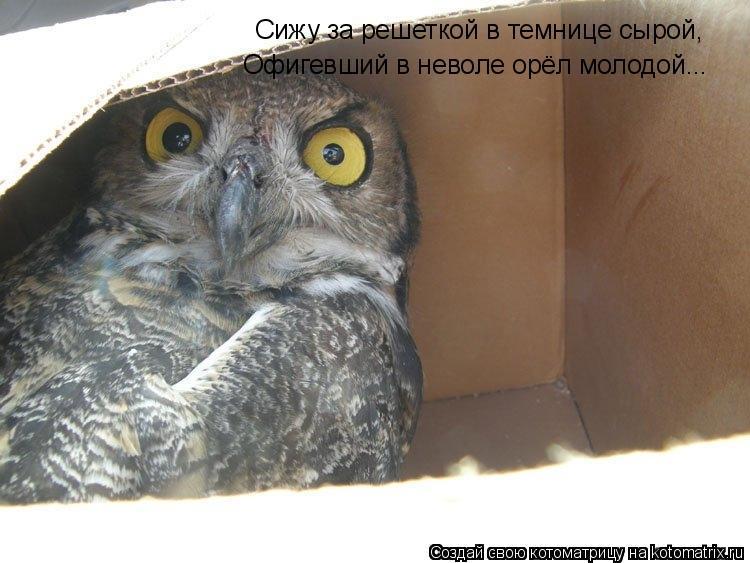 Котоматрица: Сижу за решеткой в темнице сырой, Офигевший в неволе орёл молодой...