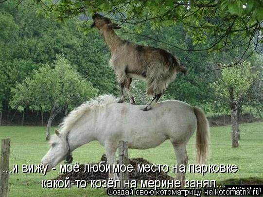 Котоматрица: какой-то козёл на мерине занял... ...и вижу - моё любимое место на парковке