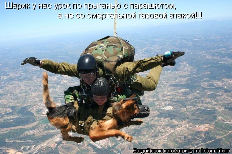 Котоматрица: Шарик у нас урок по прыганью с парашютом, а не со смертельной газовой атакой!!!