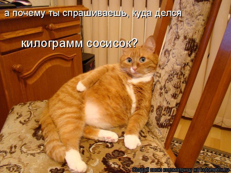 Котоматрица: а почему ты спрашиваешь, куда делся  килограмм сосисок?