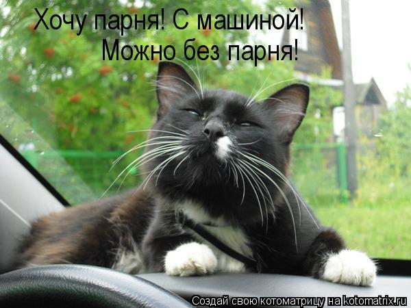 Котоматрица: Хочу парня! С машиной!  Можно без парня!