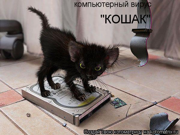 """Котоматрица: компьютерный вирус """"КОШАК"""""""