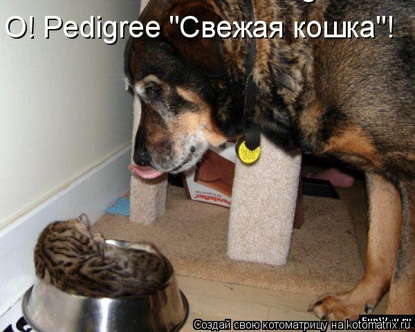 "Котоматрица: О! Pedigree ""Свежая кошка""!    О! Pedigree ""Свежая кошка""!"