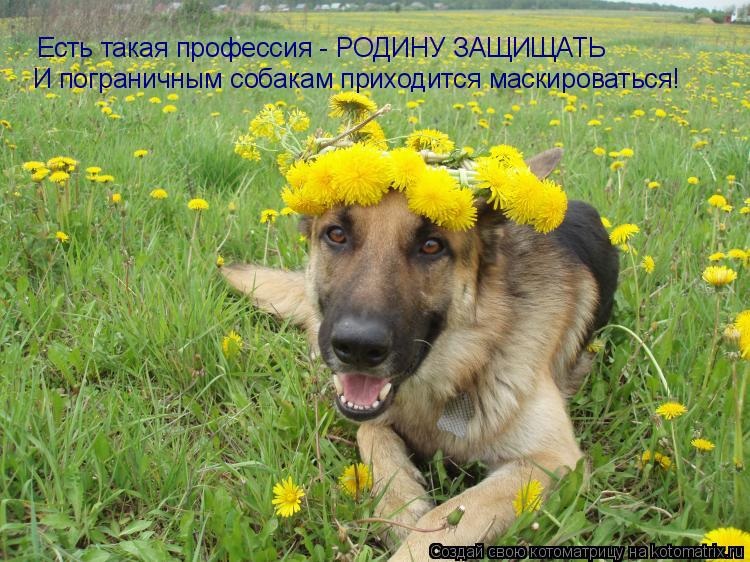 Котоматрица: Есть такая профессия - РОДИНУ ЗАЩИЩАТЬ И пограничным собакам приходится маскироваться!