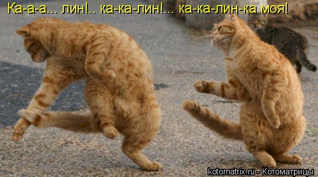 Котоматрица: Ка-а-а... лин!.. ка-ка-лин!... ка-ка-лин-ка моя!
