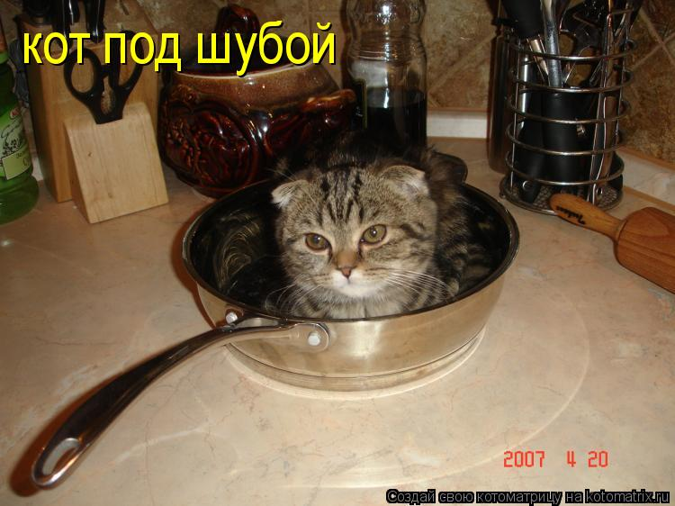 Котоматрица: кот под шубой