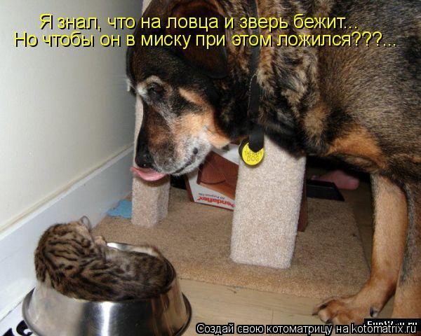 Котоматрица: Я знал, что на ловца и зверь бежит... Но чтобы он в миску при этом ложился???...