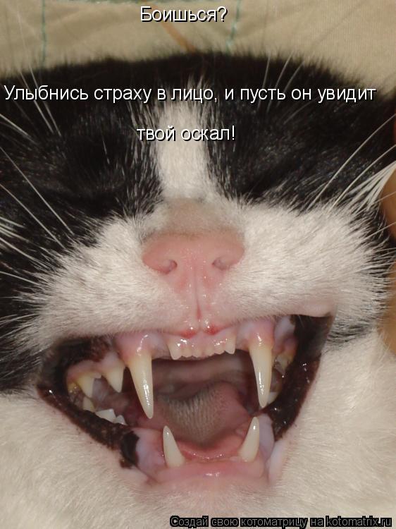 Котоматрица: Боишься? Улыбнись страху в лицо, и пусть он увидит твой оскал!