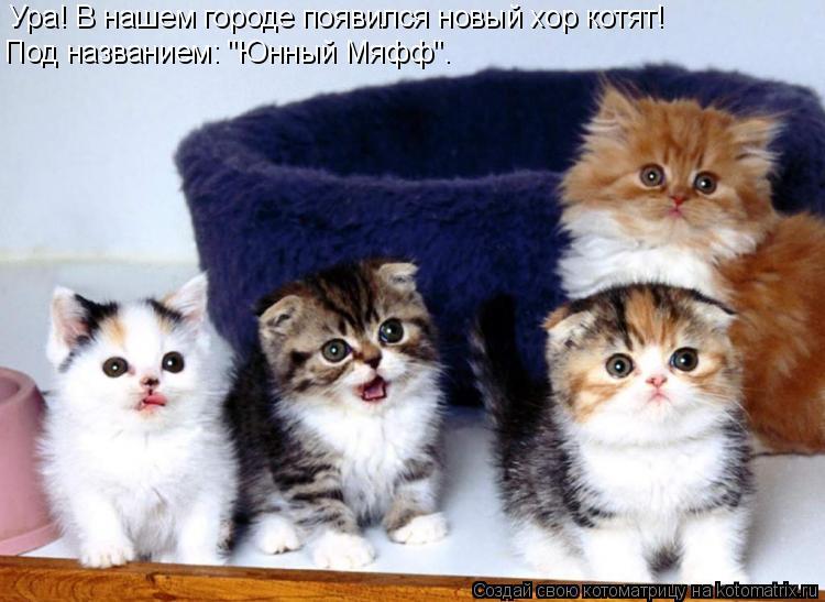 """Котоматрица: Ура! В нашем городе появился новый хор котят! Под названием: """"Юнный Мяфф""""."""