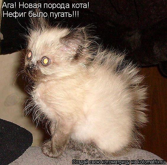 Котоматрица: Ага! Новая порода кота! Нефиг было пугать!!!