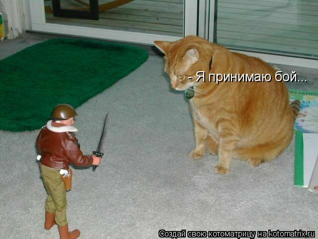 Котоматрица: - Я принимаю бой...