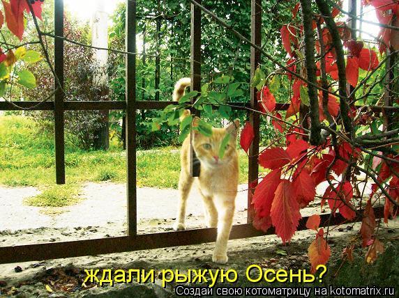 Котоматрица: ждали рыжую Осень?