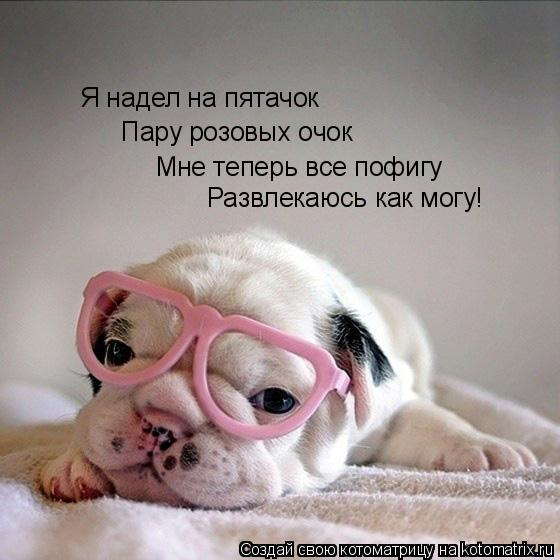 Котоматрица: Я надел на пятачок Пару розовых очок Мне теперь все пофигу Развлекаюсь как могу!