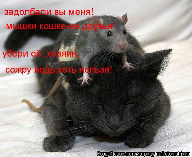 Котоматрица: задолбали вы меня!   мышки кошке-не друзья! убери её ,хозяин, сожру ведь,хоть нельзя!