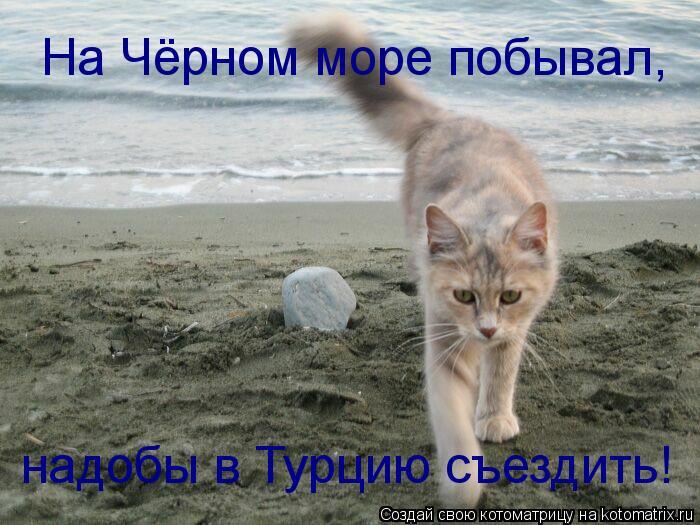 Котоматрица: На Чёрном море побывал, надобы в Турцию съездить!
