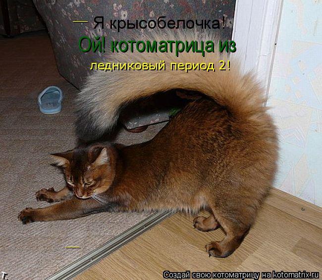Котоматрица: Я крысобелочка! Ой! котоматрица из ледниковый период 2! __ __