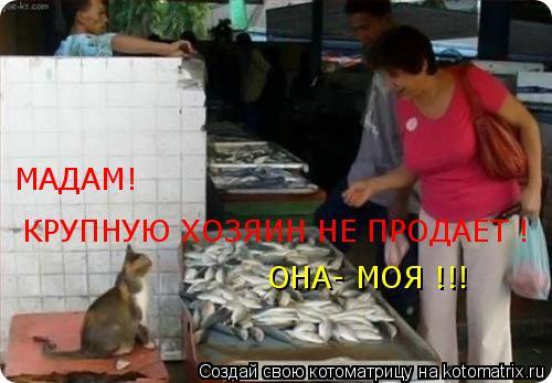 Котоматрица: ОНА- МОЯ !!!  КРУПНУЮ ХОЗЯИН НЕ ПРОДАЕТ ! МАДАМ!