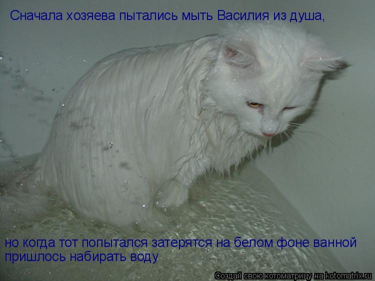 Котоматрица: Сначала хозяева пытались мыть Василия из душа, но когда тот попытался затерятся на белом фоне ванной пришлось набирать воду