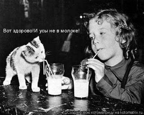 Котоматрица: Вот здорово!И усы не в молоке!