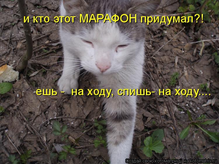 Котоматрица: и кто этот МАРАФОН придумал?! ешь -  на ходу, спишь- на ходу....