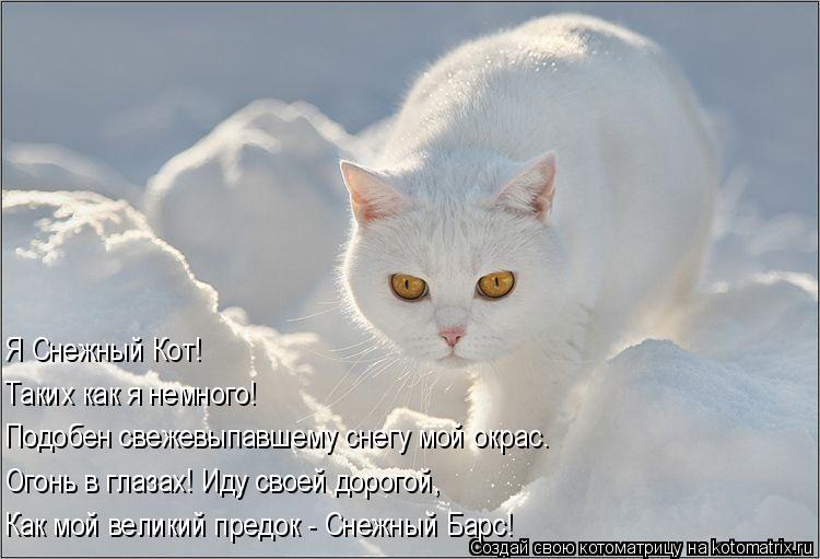 Котоматрица: Подобен свежевыпавшему снегу мой окрас. Огонь в глазах! Иду своей дорогой, Как мой великий предок - Снежный Барс! Таких как я немного! Я Снежн