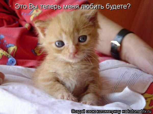 Котоматрица: Это Вы теперь меня любить будете?