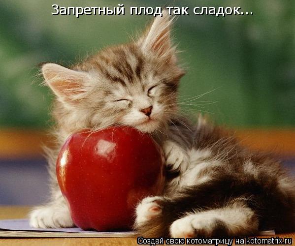 Котоматрица: Запретный плод так сладок...