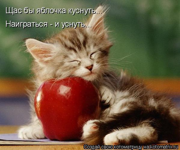 Котоматрица: Щас бы яблочка куснуть... Наиграться - и уснуть...