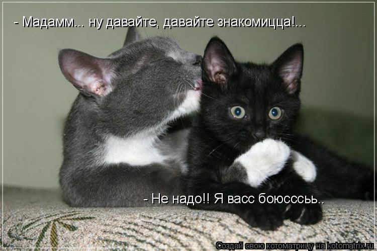 Котоматрица: - Мадамм... ну давайте, давайте знакомицца!... - Не надо!! Я васс боюсссьь..