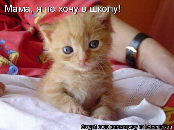 Котоматрица: Мама, я не хочу в школу!