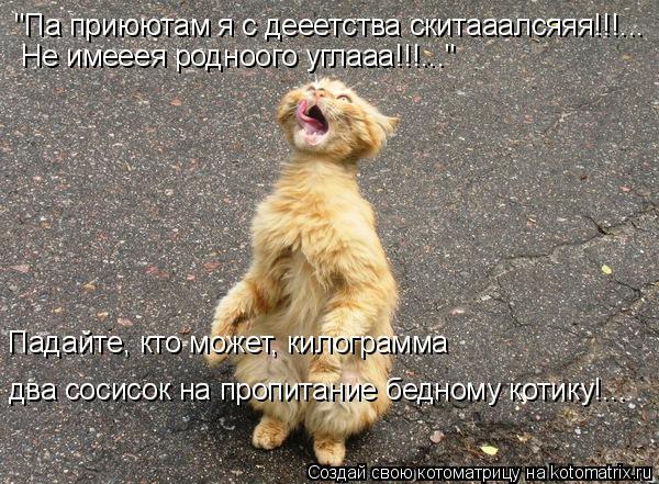 """Котоматрица: Падайте, кто может, килограмма  два сосисок на пропитание бедному котику!... """"Па приюютам я с дееетства скитааалсяяя!!!... Не имееея родноого уг"""
