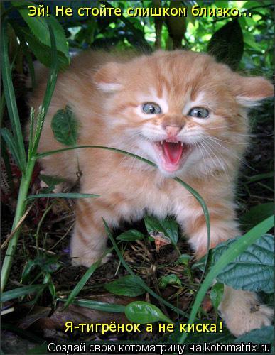 Котоматрица: Эй! Не стойте слишком близко... Я-тигрёнок а не киска!