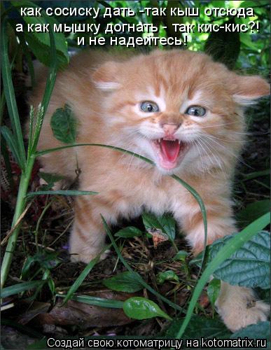 Котоматрица: как сосиску дать -так кыш отсюда а как мышку догнать - так кис-кис?! и не надейтесь!