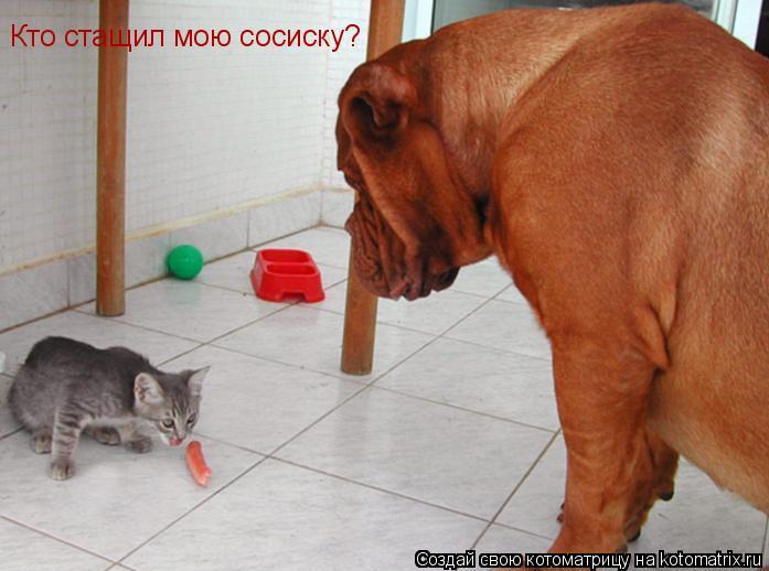 Котоматрица: Кто стащил мою сосиску?