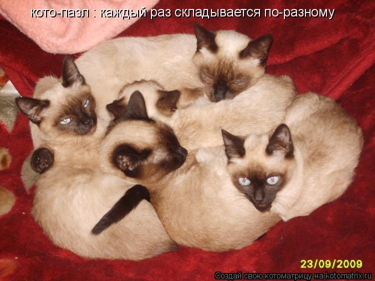 Котоматрица: кото-пазл : каждый раз складывается по-разному