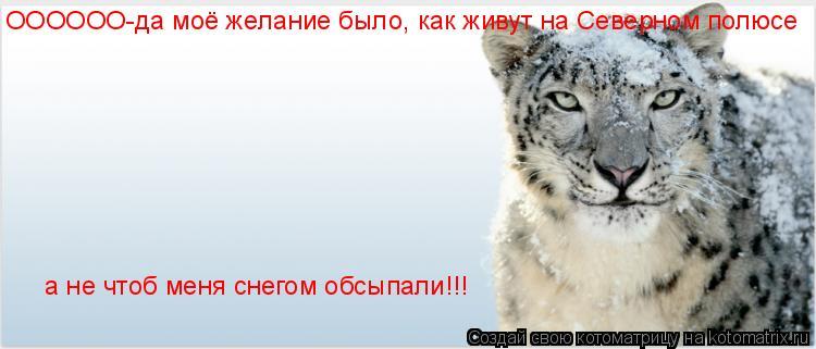 Котоматрица: ОООООО-да моё желание было, как живут на Северном полюсе  а не чтоб меня снегом обсыпали!!!