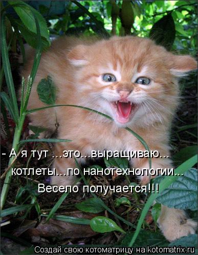 Котоматрица: - А я тут ...это...выращиваю... котлеты...по нанотехнологии... Весело получается!!!