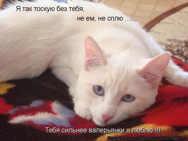 Котоматрица: Я так тоскую без тебя, не ем, не сплю ....... Тебя сильнее валерьянки я люблю !!!