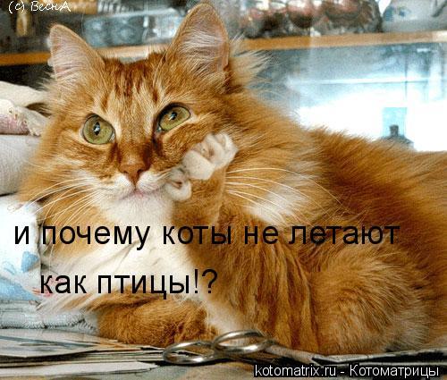 Котоматрица: и почему коты не летают как птицы!?