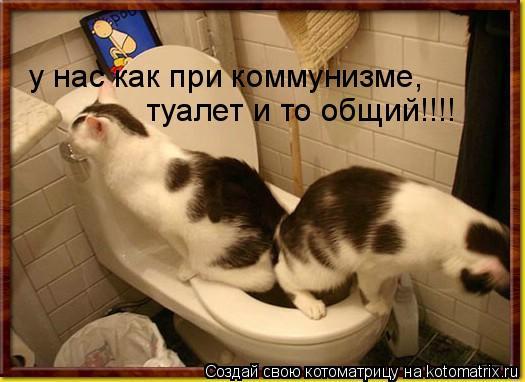 Котоматрица: у нас как при коммунизме,  туалет и то общий!!!!