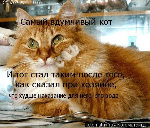 Котоматрица: Самый вдумчивый кот И тот стал таким после того, как сказал при хозяине,  что худше наказание для него, это вода