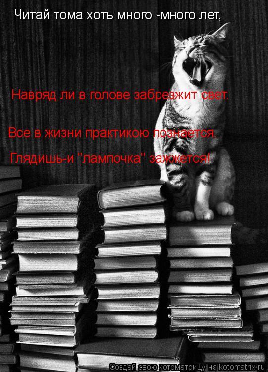 """Котоматрица: Читай тома хоть много -много лет, Навряд ли в голове забрезжит свет. Все в жизни практикою познается. Глядишь-и """"лампочка"""" зажжется!"""