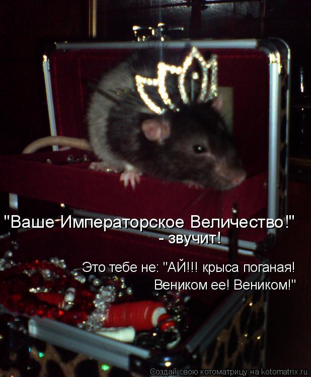 """Котоматрица: """"Ваше Императорское Величество!"""" Это тебе не: """"АЙ!!! крыса поганая!  Веником ее! Веником!"""" - звучит!"""