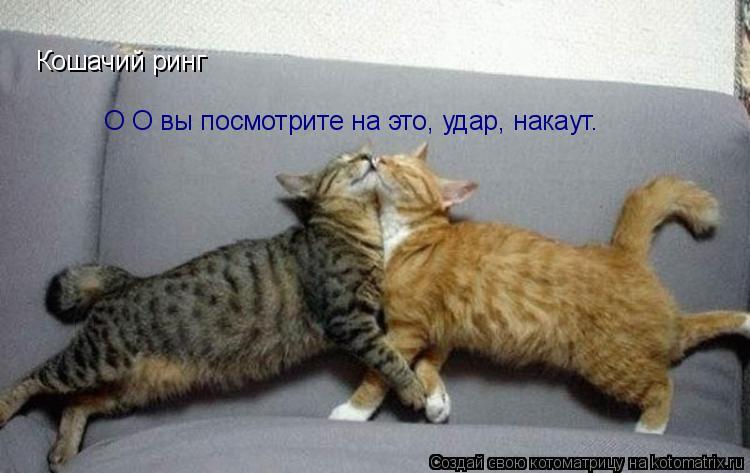 Котоматрица: Кошачий ринг О О вы посмотрите на это, удар, накаут.